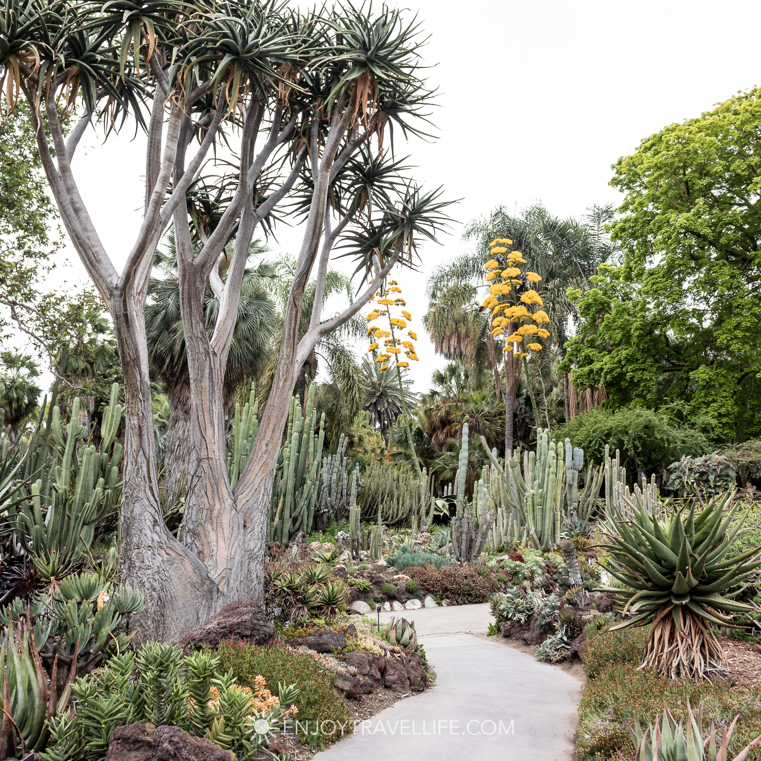Dessert Garden - The Huntington Botanical Gardens