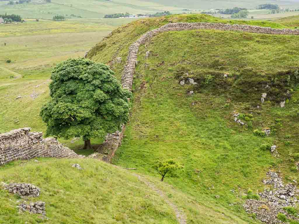 A view of Hadrian's Wall and a tree in Northern England