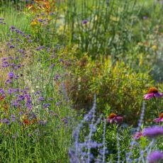 Why Plant These Drought Resistant Perennials? (Especially If You Travel!)