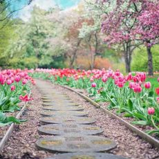 Spring Flowering Bulbs You Can Plant Now (And How to Do It!)