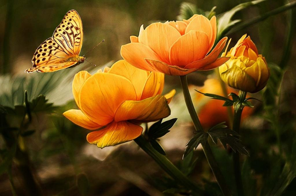 Inspirational Garden Quotes - orange spotted butterfly and orang flowers