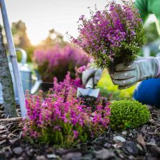 31 Simple Tips for Preparing a Garden for Winter Time