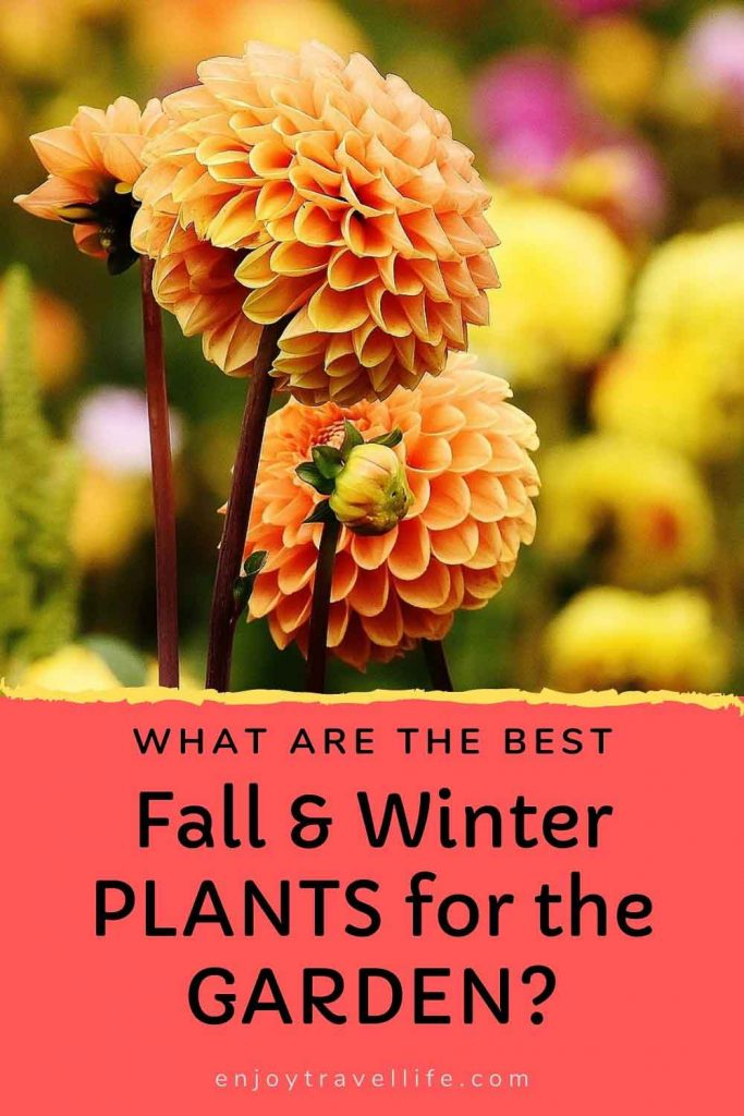 best Fall and Winter Plants Pinterest Pin