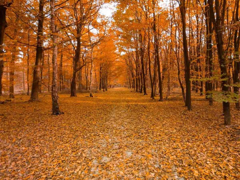 packing checklist for fall in new england (autumn woodland scene with path)