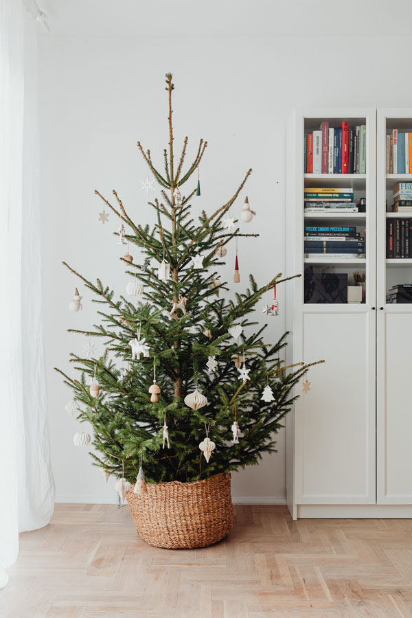 Container grown Christmas trees look lovely with white ornaments and large woven container