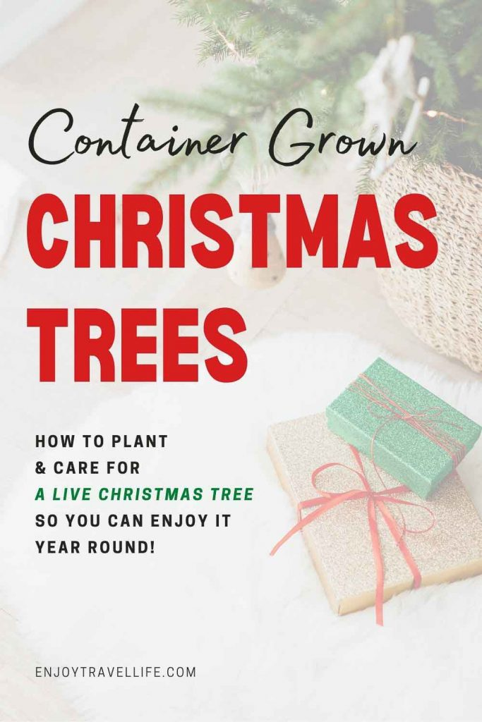 container grown Christmas trees Pinterest pin