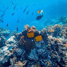 Expert Travel: What You Need to Know About Banda Neira Island in Indonesia