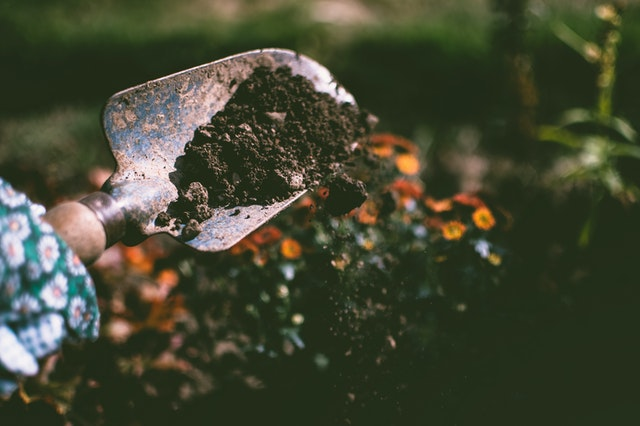 A hand shovel of soil spills to the ground.