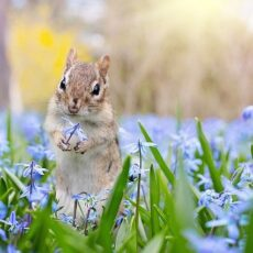 How to Attract Wildlife to Your Yard | 10 Easy & Nature-Friendly Ideas