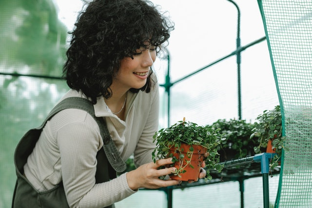 A woman in a greenhouse handles a small pot filled with a green plant.