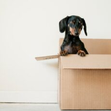 5 Decluttering And Cleaning Ideas For Moving House
