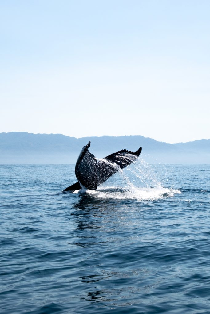 Legally blind baseball fan, Jason hopes to use his eSight to go Whalewatching like the whale fin featured in this photo