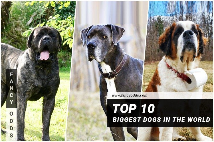 Dogs in biggest world the World's Largest