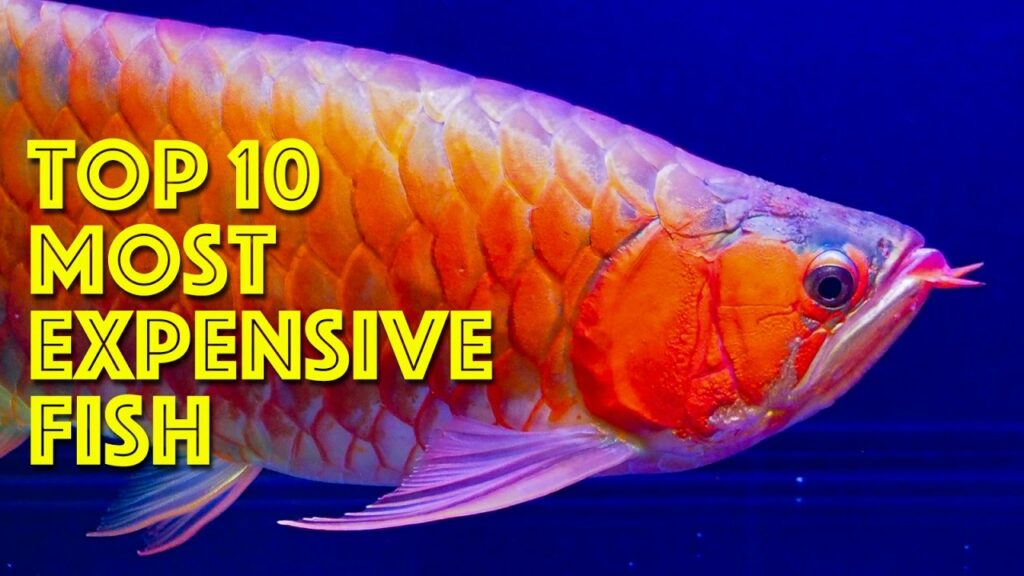 Top 10 Most Expensive Fish In The World