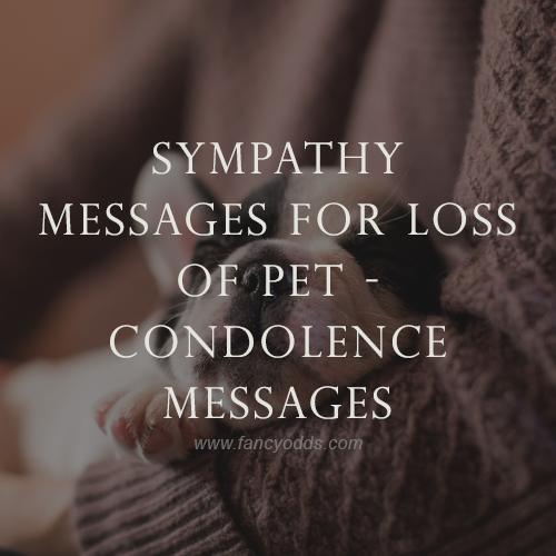 Sympathy message for the loss of pet