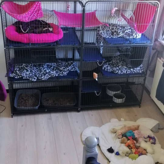 What cage is best for a ferret?
