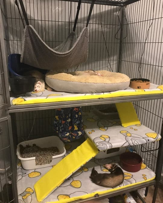 Do ferrets need a big cage?