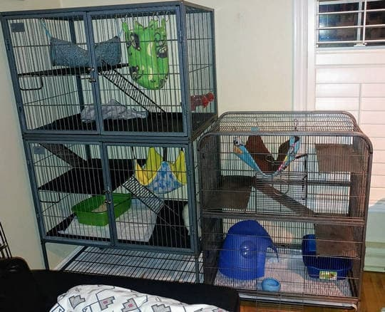 Should I cover my ferrets cage at night?