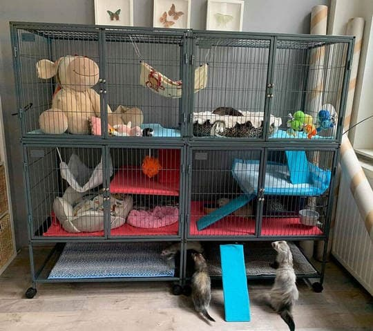 what to put in a ferret cage