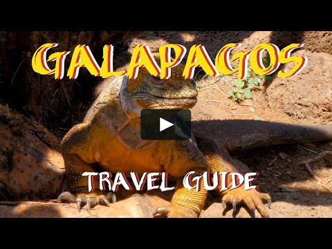 Galapagos travel guide -How to get to Galapagos islands in Ecuador. Link in description  G