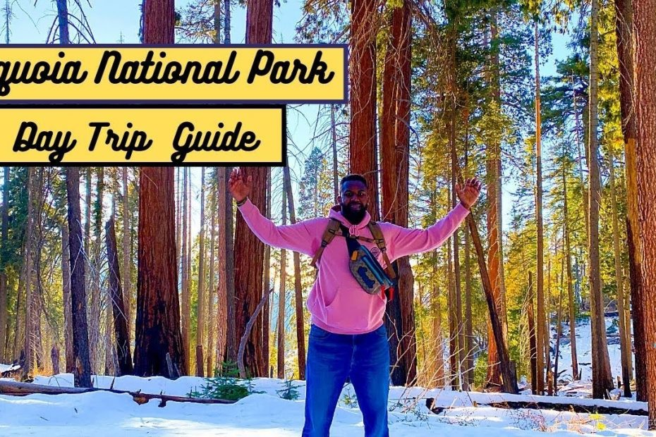 Sequoia National Park: Day Trip Travel Guide (Things to do and see)