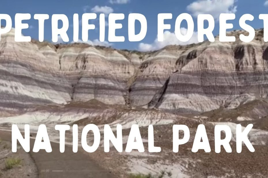 One Day in Petrified Forest   A National Park Travel Guide