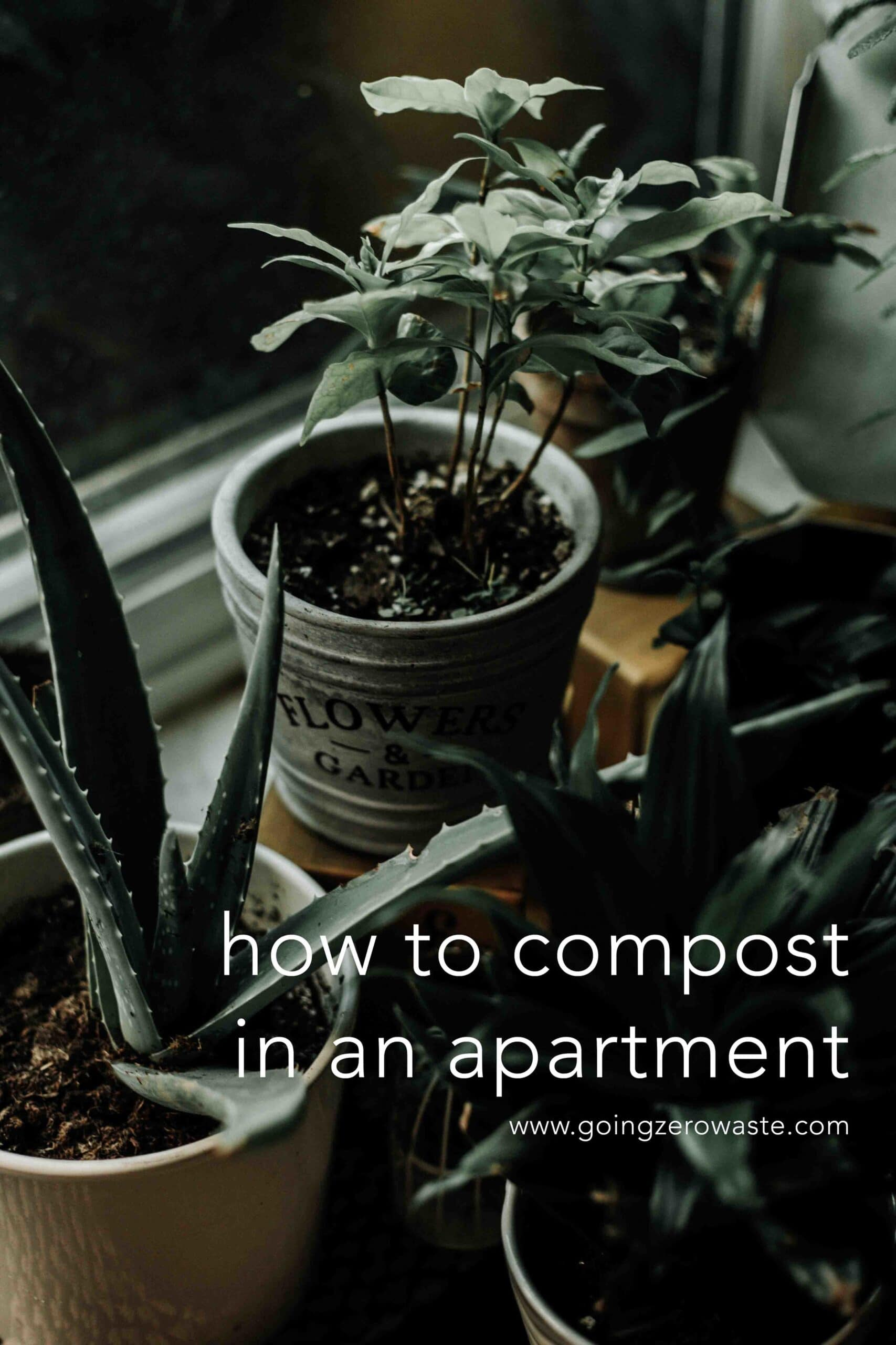 Composting Solutions for Apartment Dwellers