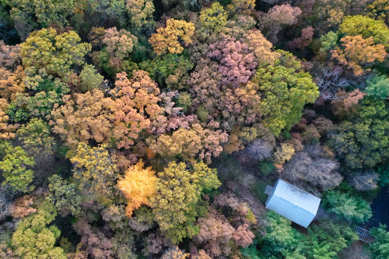 Fall Colors in Columbia County