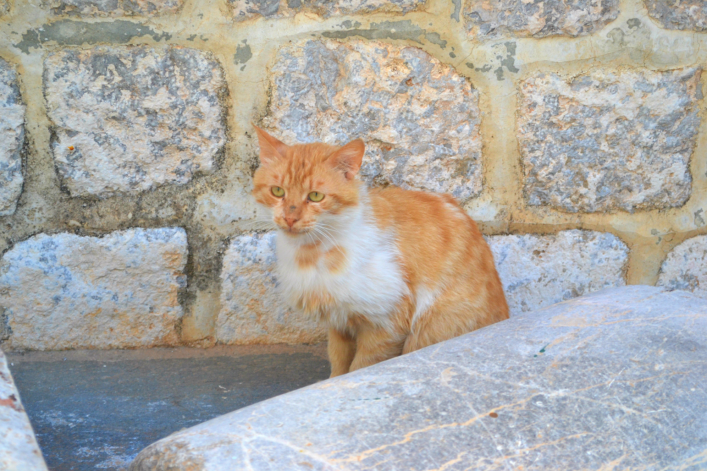 Family holidays in Hydra with kids. Cats are very popular and all over the island.