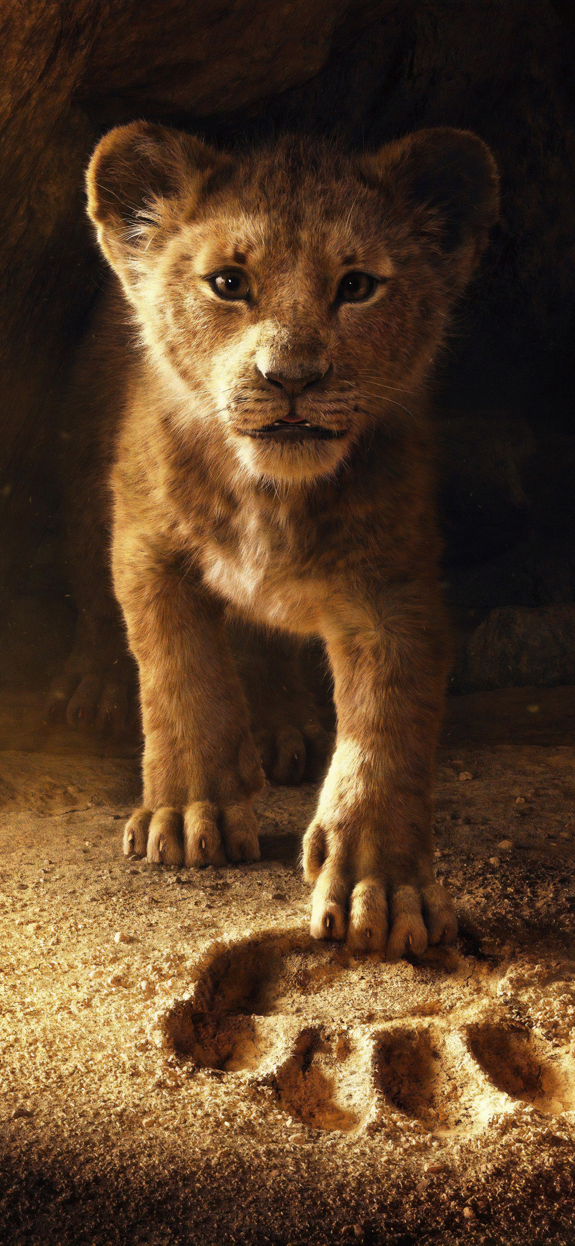 Ultra Hd Lion Hd Wallpaper For Android