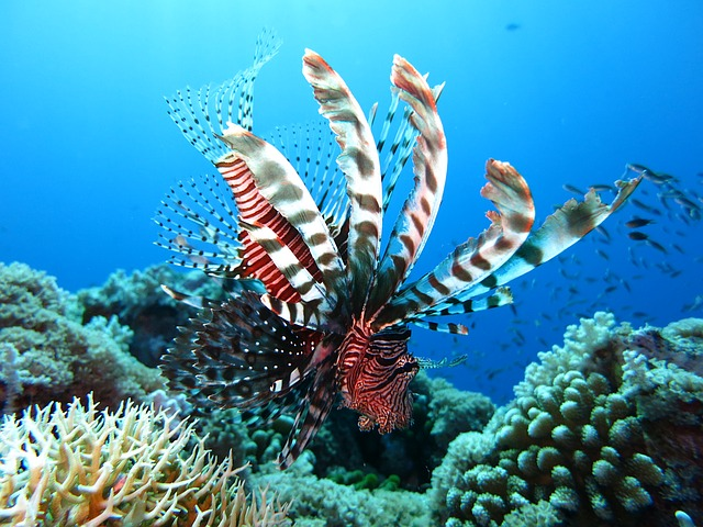 a lion fish in mexico