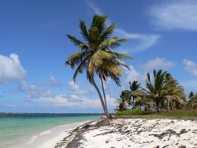 palm trees on the beach of the dominican republic