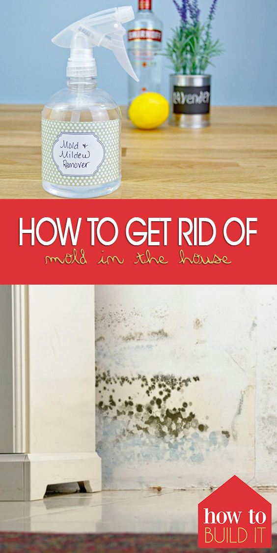 How To Get Rid Of Mold In House 6