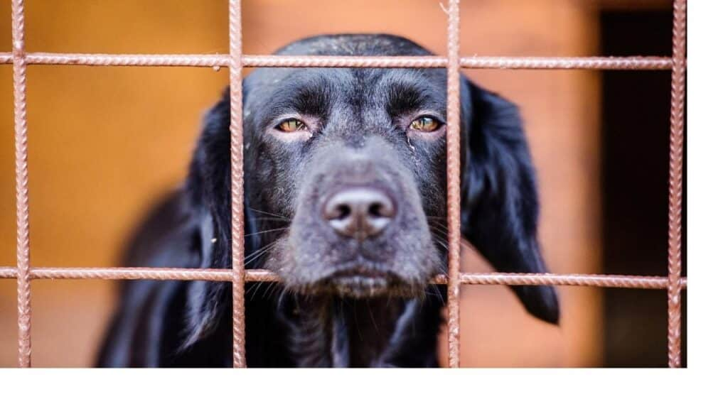 Depression in dogs can be caused by many things.