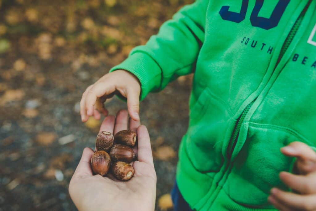 Acorns are Poisonous to Dogs because of the Tannic Acid