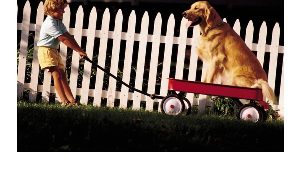 Dogs with degenerative myelopathy may need to be carted around.
