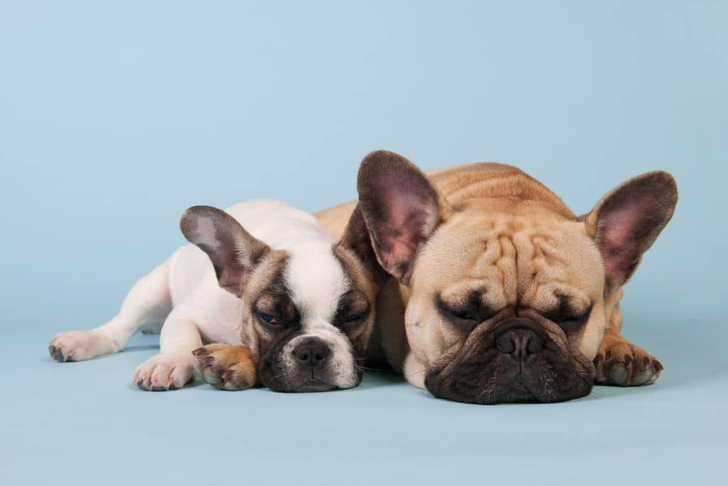 Weaning Your Dog from Prozac