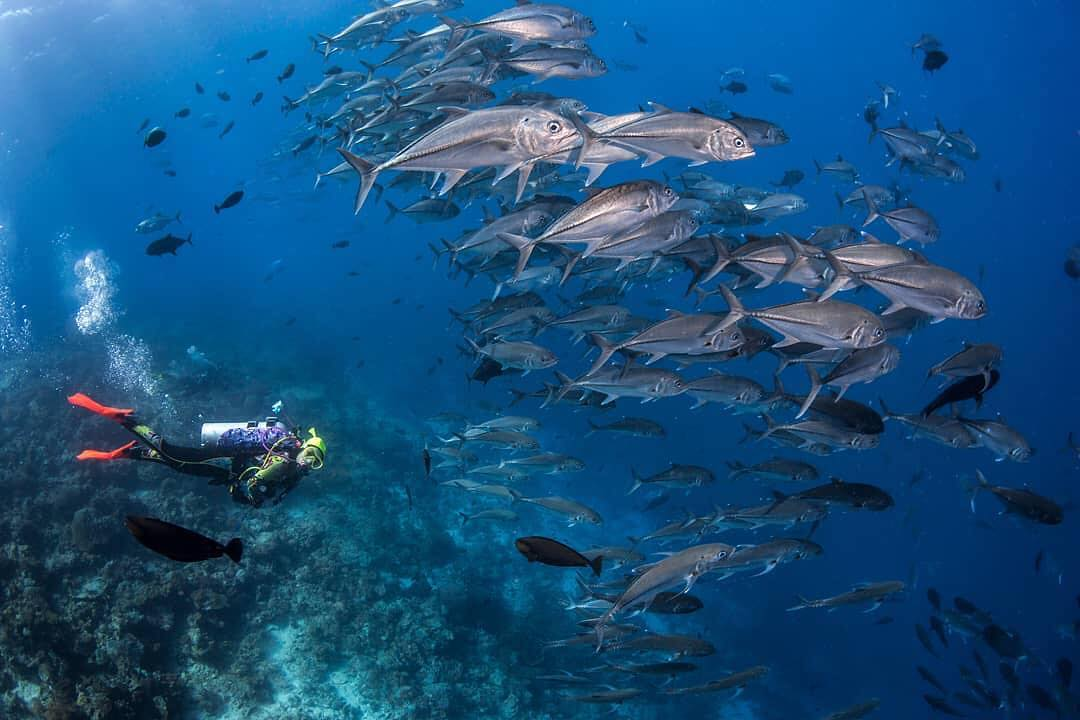 Ali Reef is one of best Wakatobi National Park diving and snorkeling spot. by @gianfictoria