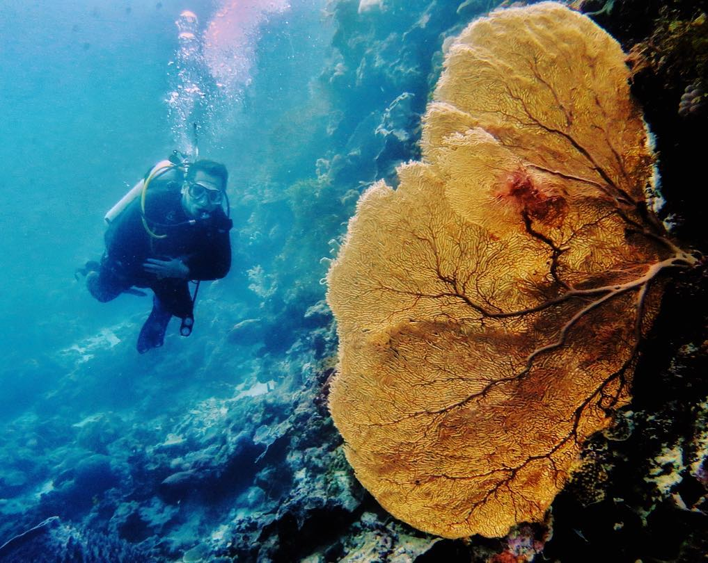 Diving in Wakatobi National Park Indonesia is one of the best activity there! via @yunikharisman
