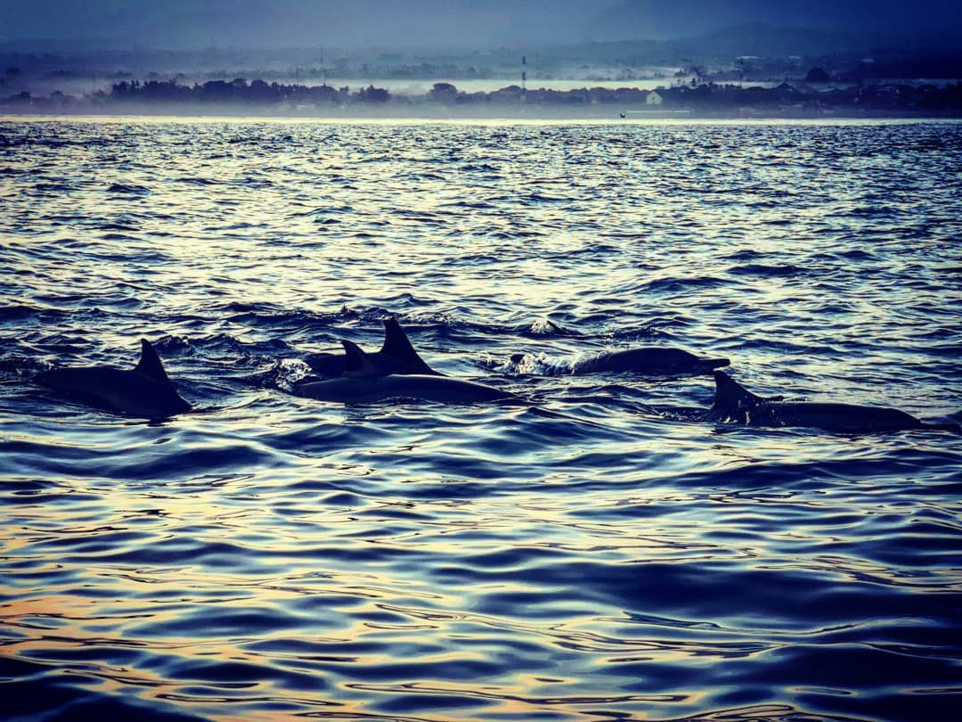 How much does it cost to see dolphins on Lovina Beach Bali!? via @chouki81