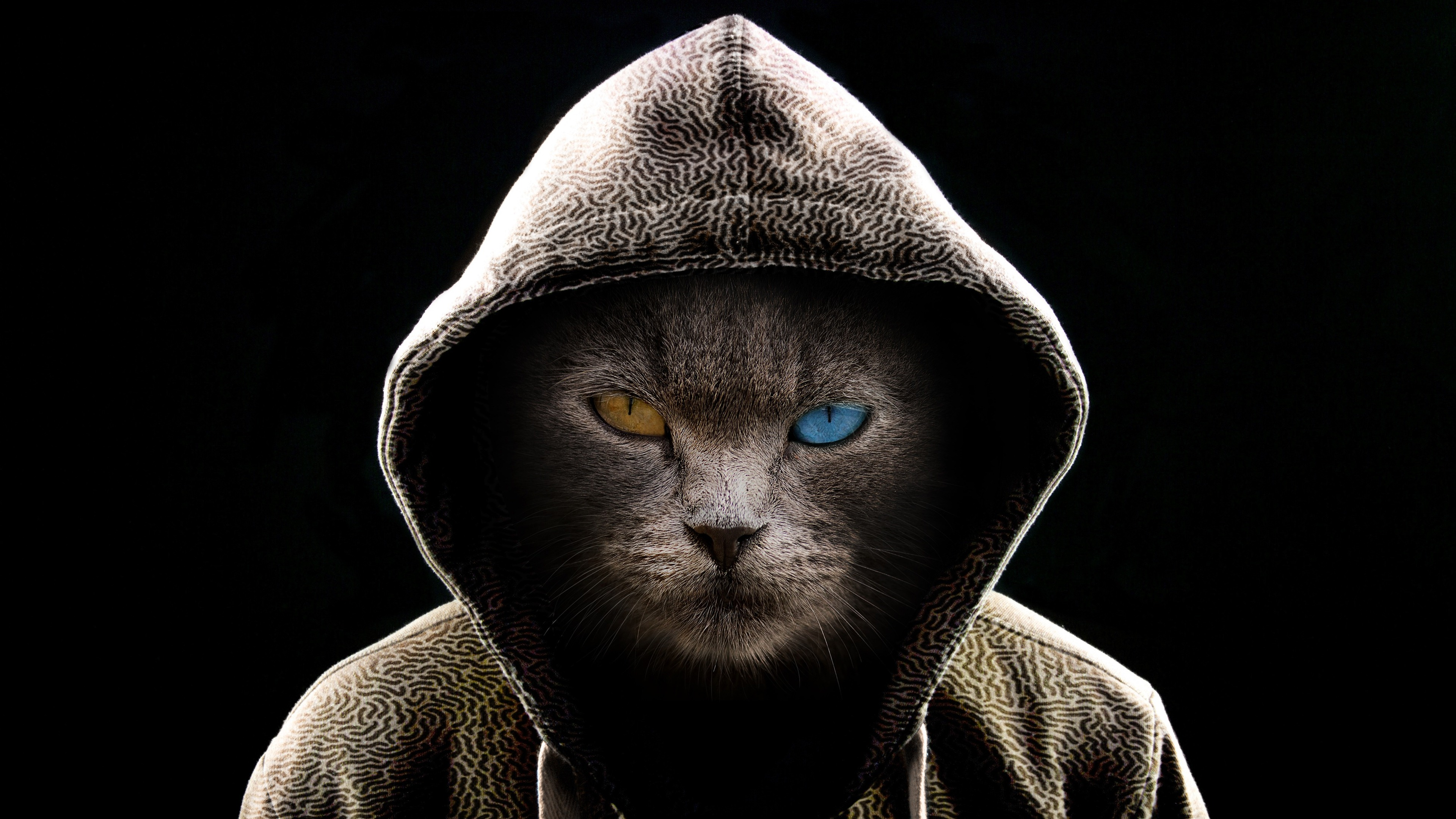 Cool Cat Pictures Wallpapers