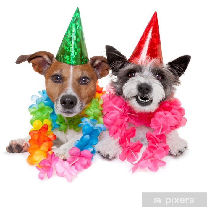 Two Funny Birthday Dogs Celebrating Close Together As A Couple Poster Pixers We Live To Change