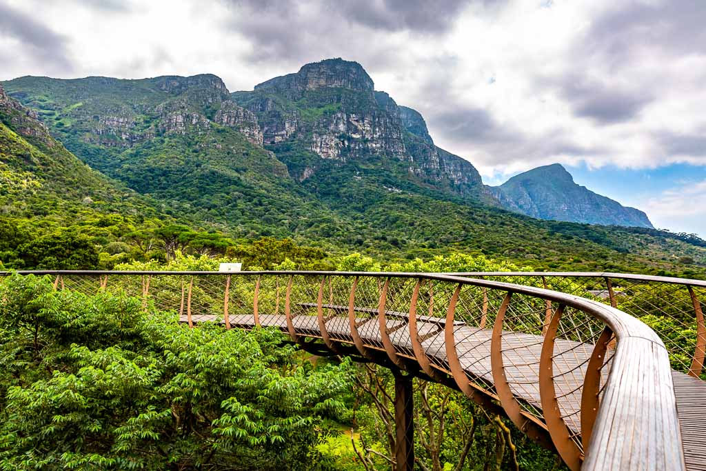 This pic shows Tree canopy walkway in Kirstenbosch Botanical Garden in Cape Town city.The pic is taken in daytime and in march 2019.