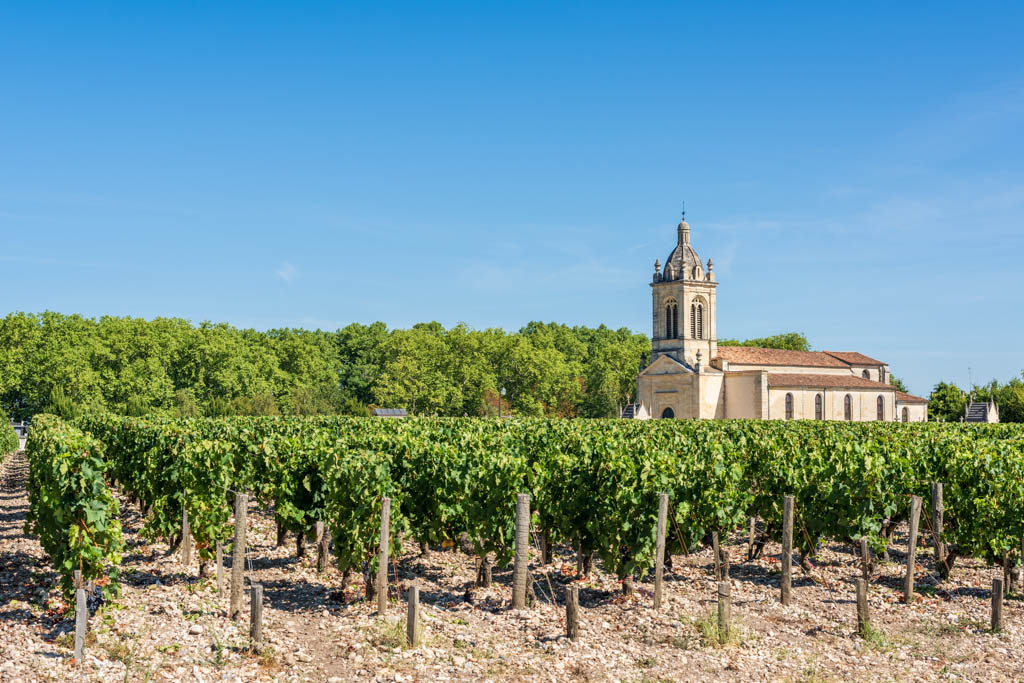 Grapes and vineyards of Margaux, in the famous Medoc area in France, between Bordeaux and Arcachon