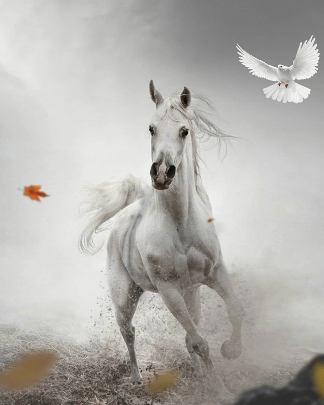 Horse Running Poster Editing Background