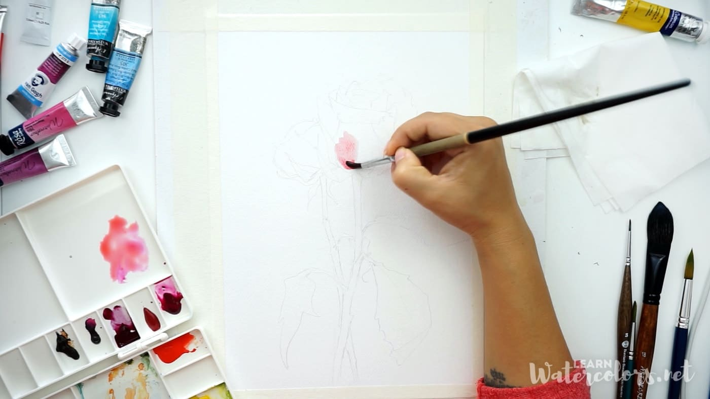 Watercolor flowers: How to paint a pink rose step by step for beginners 2