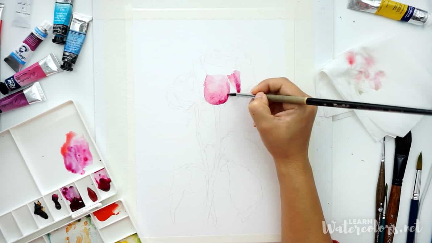 Watercolor flowers: How to paint a pink rose step by step for beginners 3