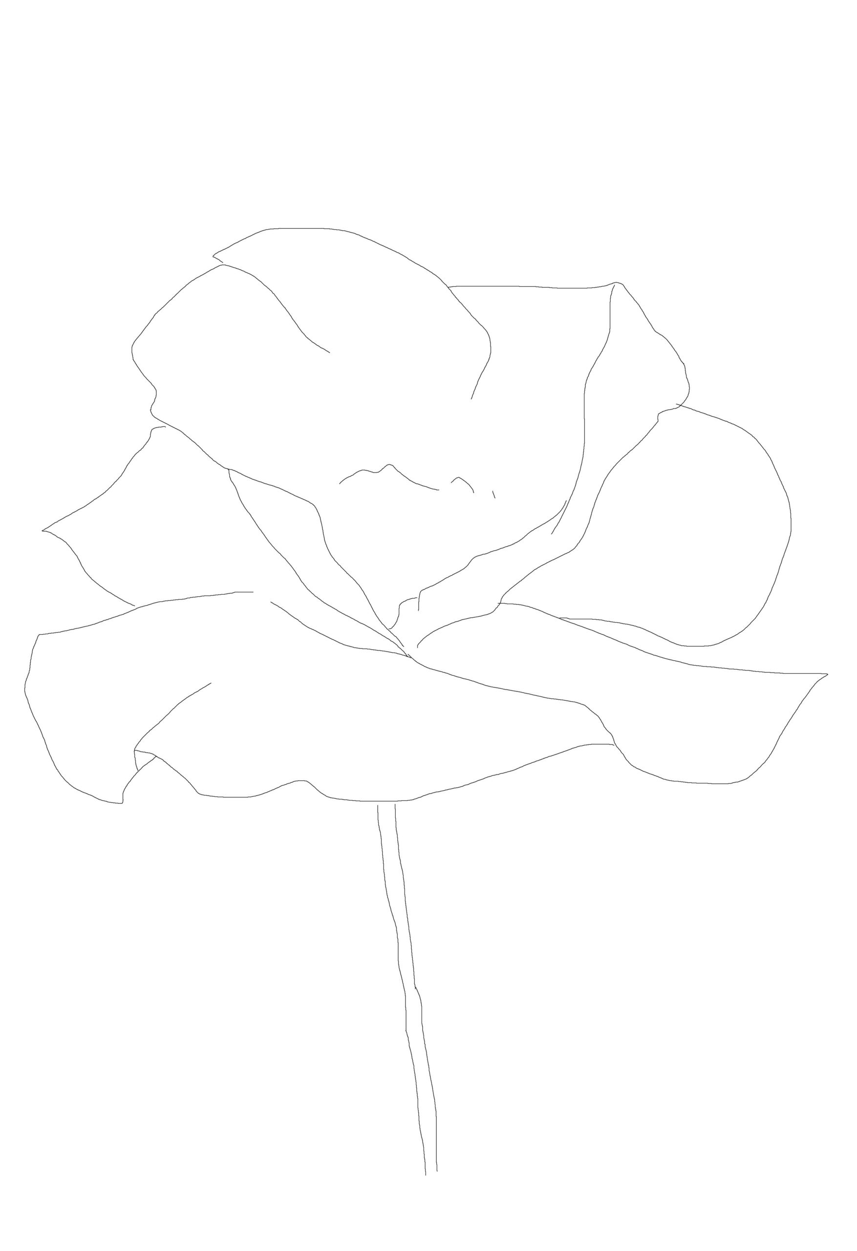 Paint a poppy flower with watercolor step by step 1