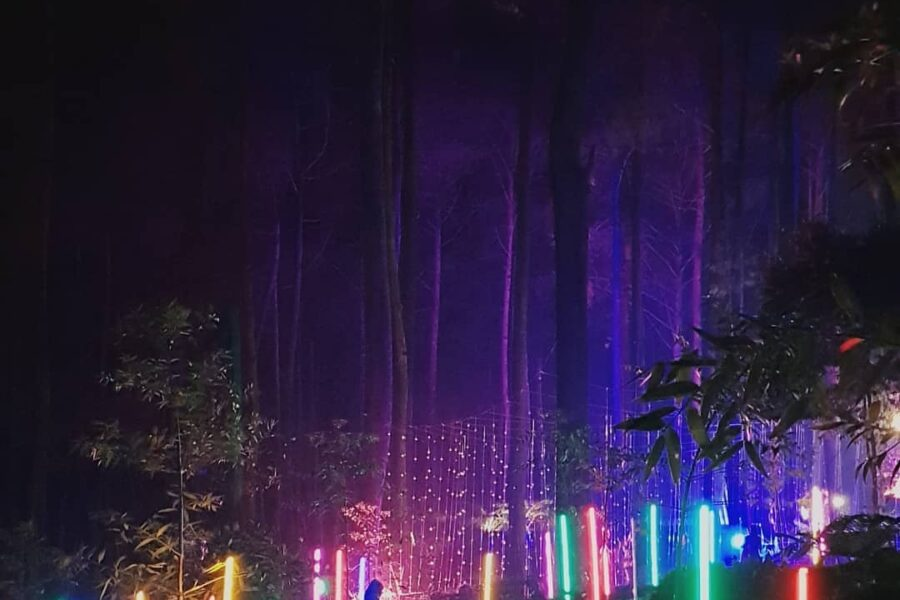 Colors of the woods, colors of fantasy. - Orchid Forest Lembang well captured by...