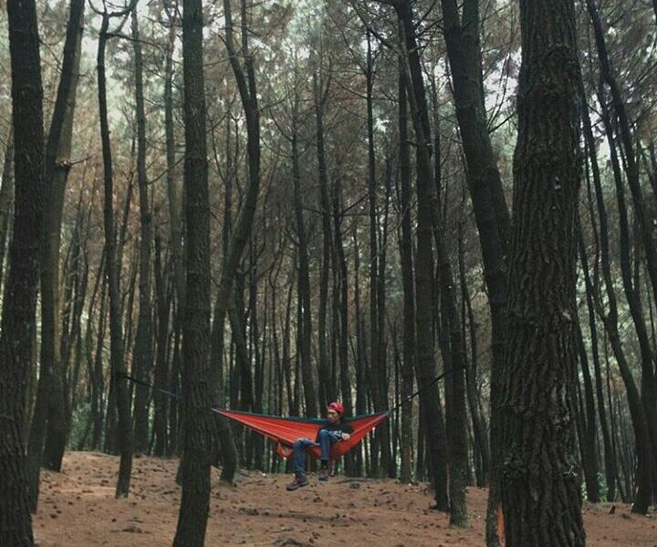 A day in the woods ↟ ↟  Photo taken at Mt. Halimun by  #exploresukabumi...